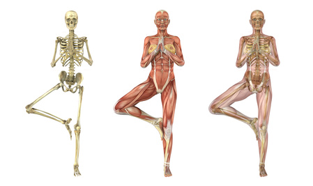 Yoga Tree Pose - Musculoskeletal System